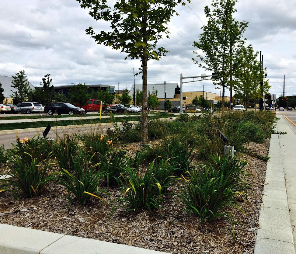 Median strip landscaping