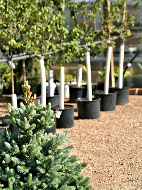 Hartman Companies Tree Center