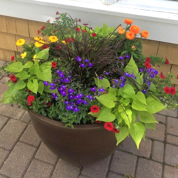 Seasonal Services - Summer Planter
